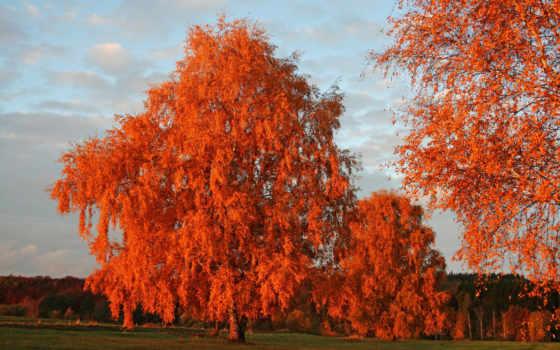 осень, листва, оранжевая, каждой, осенних, осенью, расцветаю, again, осенние,
