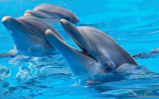 дельфины, дельфинами, фотообои, картины, трио,