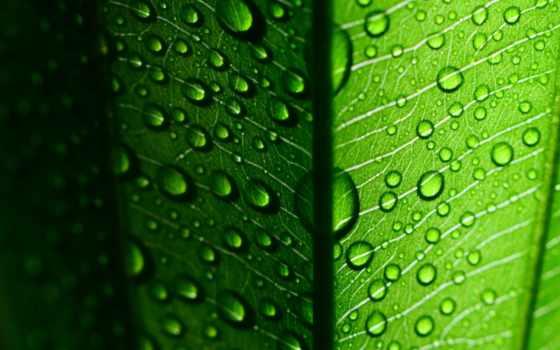 макро, листва, капли, листочек, зелёный, water, fullscreen,