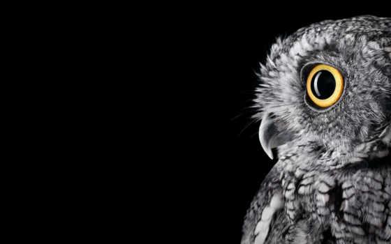сова, гладь, studio, microsoft, owls, pinterest,