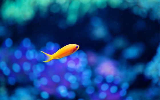 fish, аквариум, море, рыбки, водой, под, девушка, art, золотая, ocean,
