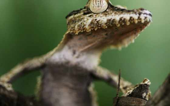 animales, reptiles, por