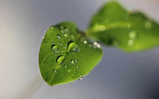 серый, листва, water, drop, капли, посмотрите, макро, high, зелёный, яndex, коллекциях,