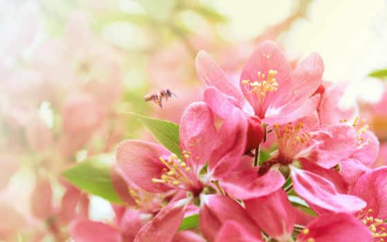 весна, цветы, Сакура Фон № 58460 разрешение 2560x1600