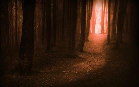 лес, дерево, магия