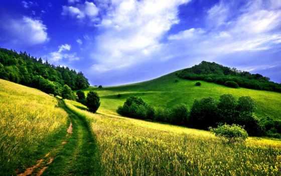 поле, дорога, лес