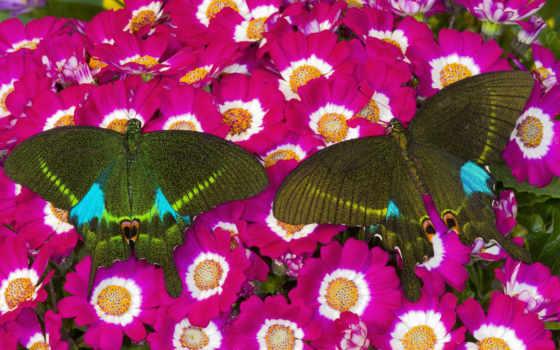 бабочки, классные, flowers