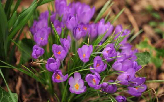 vesna, cvety, priroda