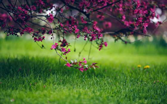 priroda, vesna, cvety