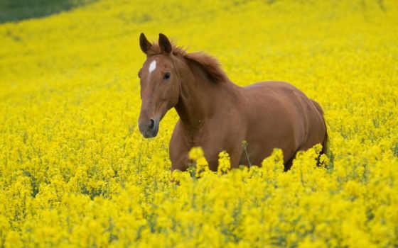 лошади, zhivotnye, лошадь