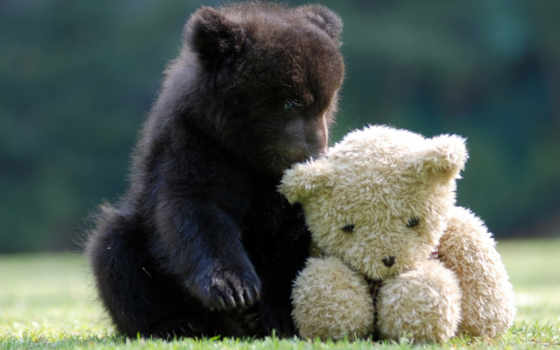 мишка, плюшевый, toy, медвежонок,