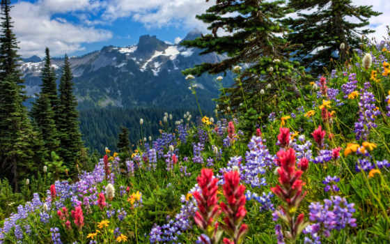 cvety, природа, дневник, картины, liveinternet, февр, весна, записи, рубрике, горы, художников,