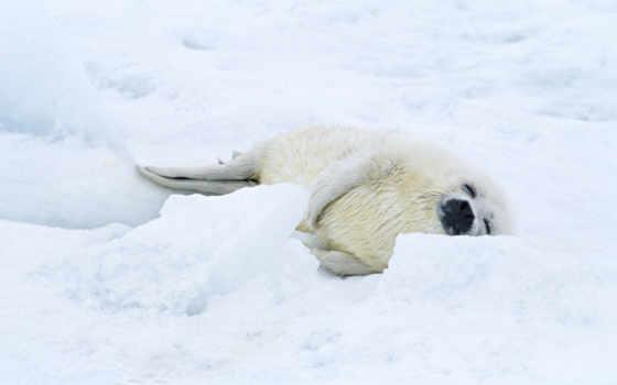 cd, тюлень