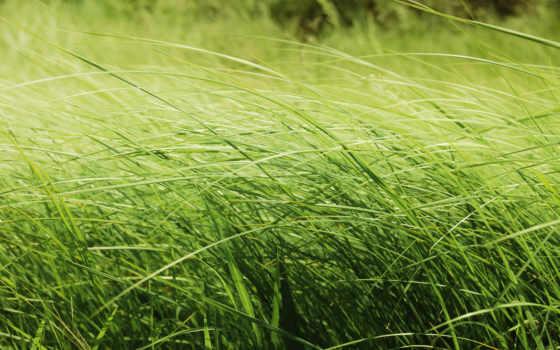 природа, поле, трава, зелёный, макро, красавица, лес, sun, категории,