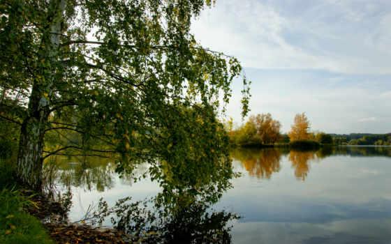 река, trees, summer, трава, природа, березы, лес, фотообои, береза,