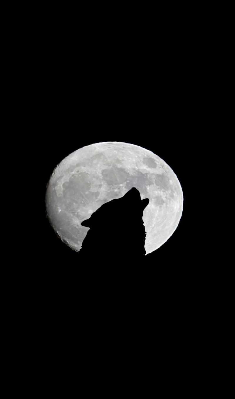 free, animal, сегодня, волк, программы,