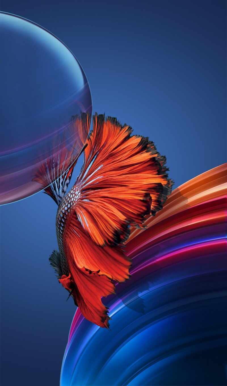 art, fish, redfish, print, social, стена, betta, live, online, большой