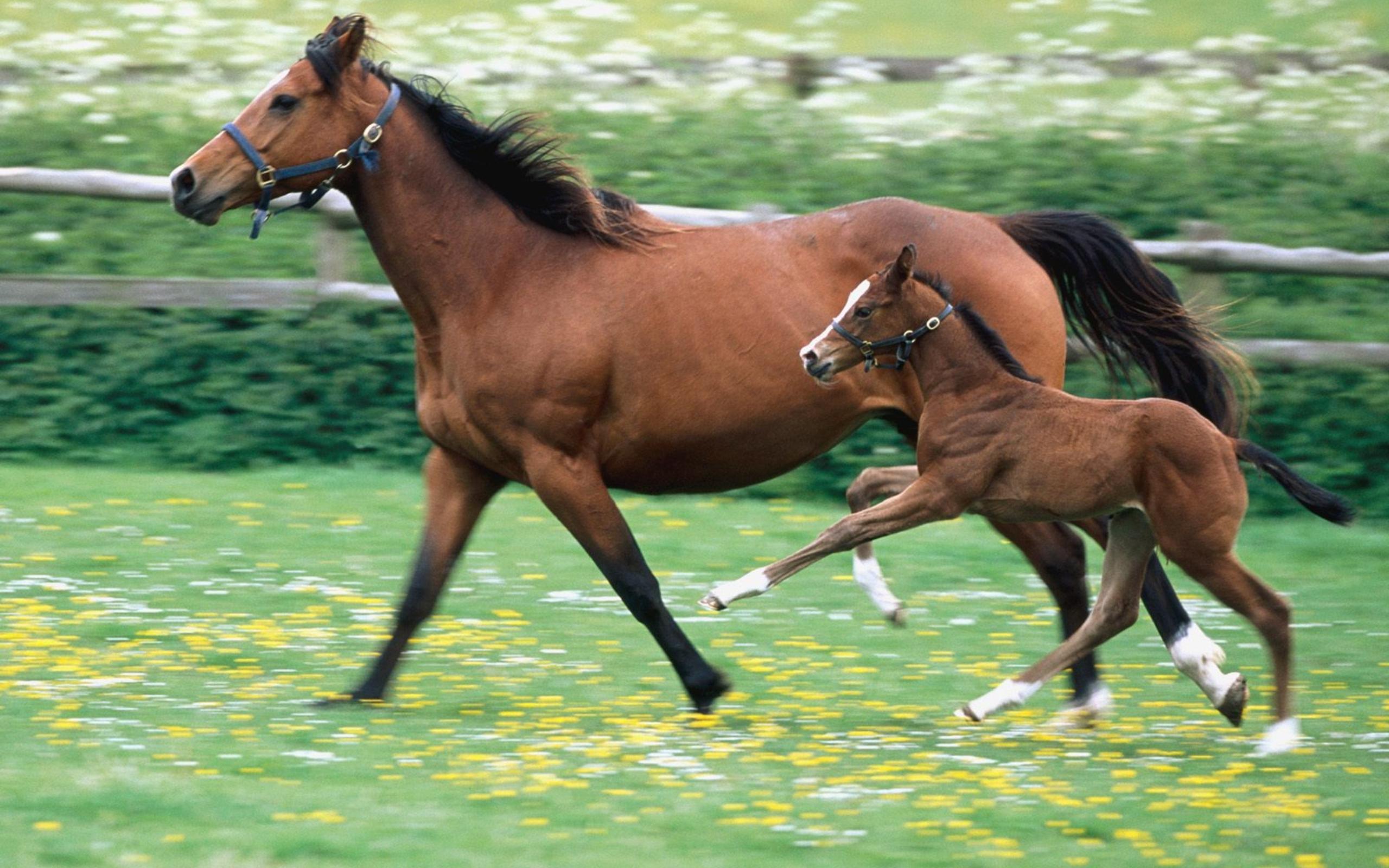 Обои лошадь, жеребёнок. Животные foto 19