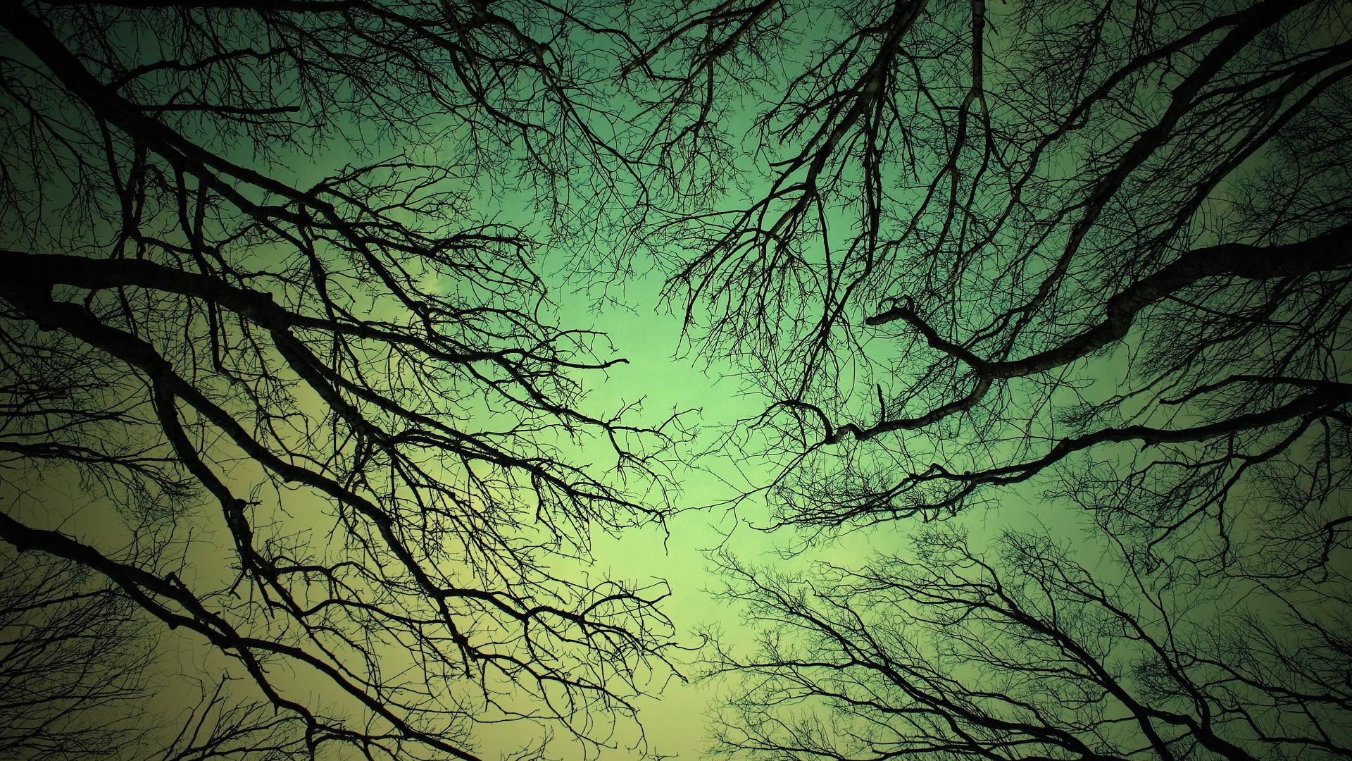 природа деревья ветки бесплатно