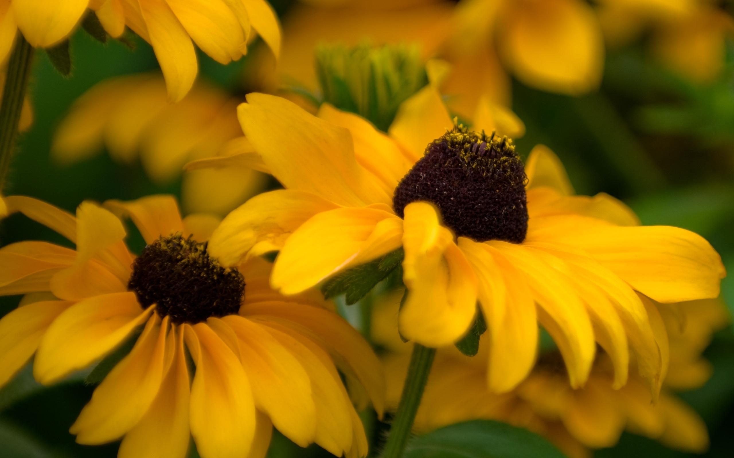 цветы желтые без смс