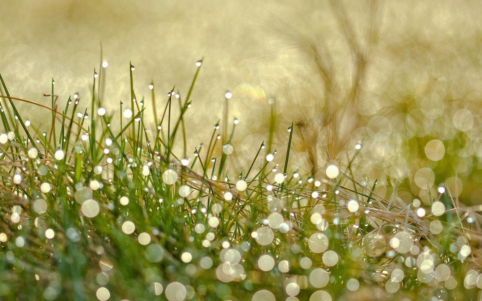 картинки солнечные весна макро распространенным для общего