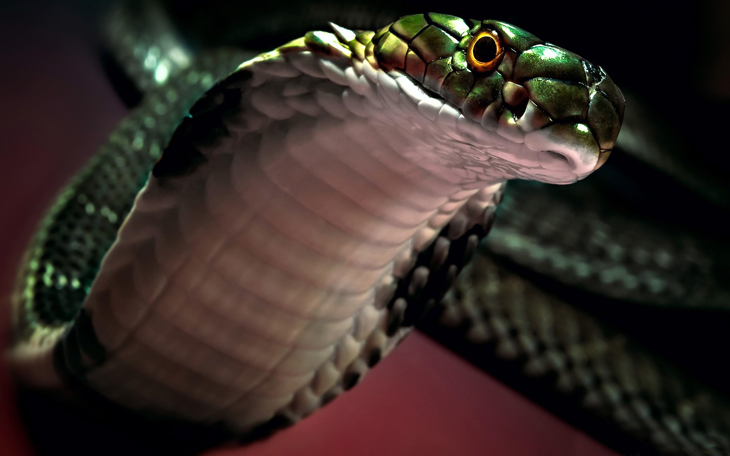 змея белая язык животное скачать