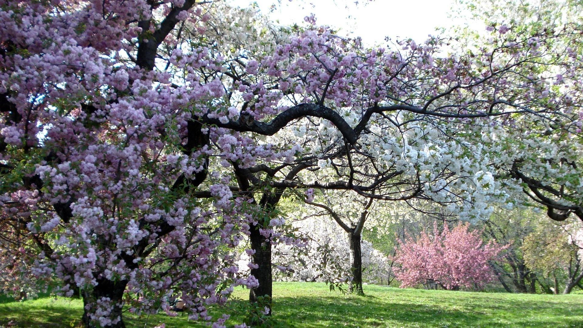 Картинки русские, картинка цветут сады весной