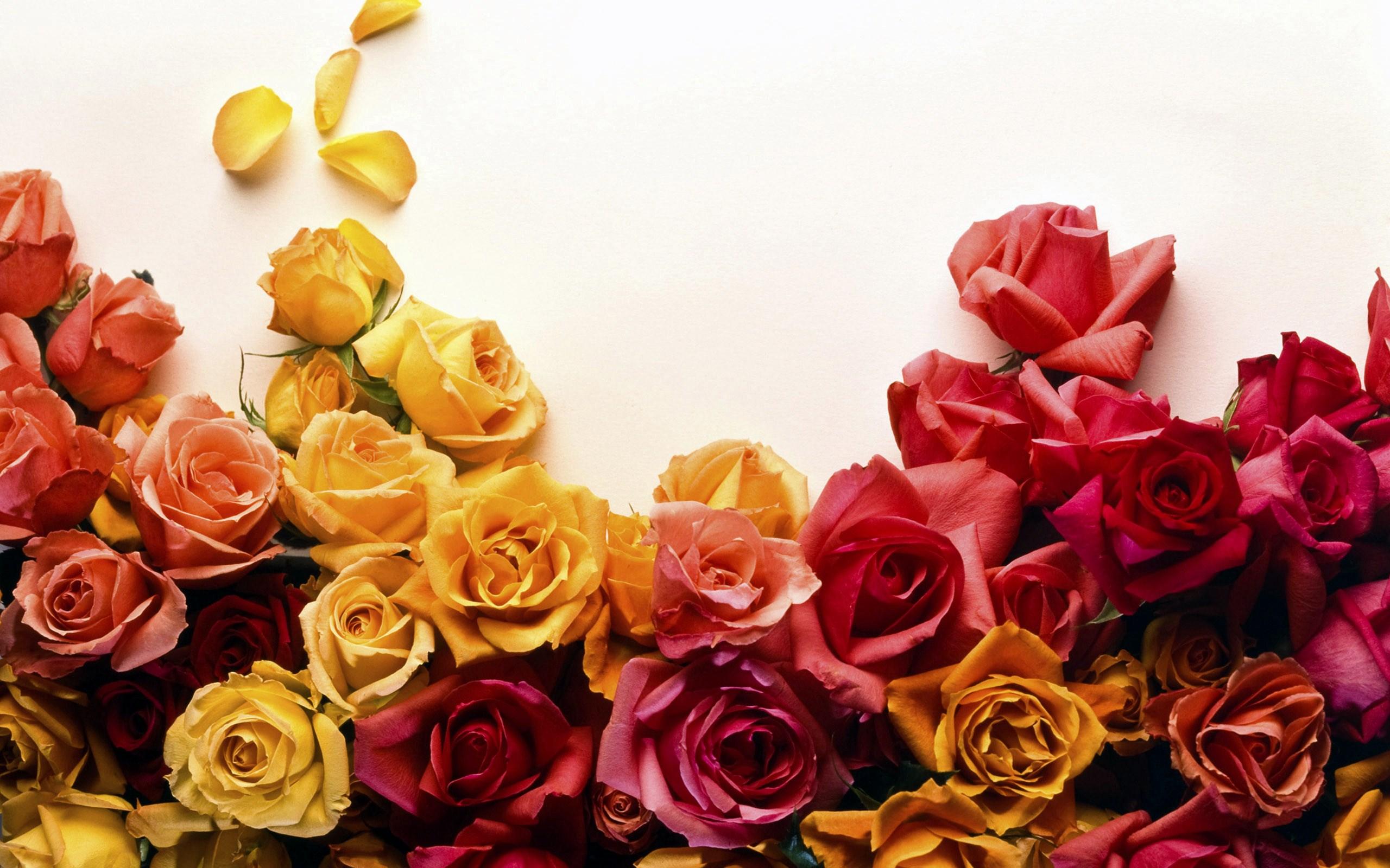 Телефон самсунг, красивые картинки для поздравлений цветы