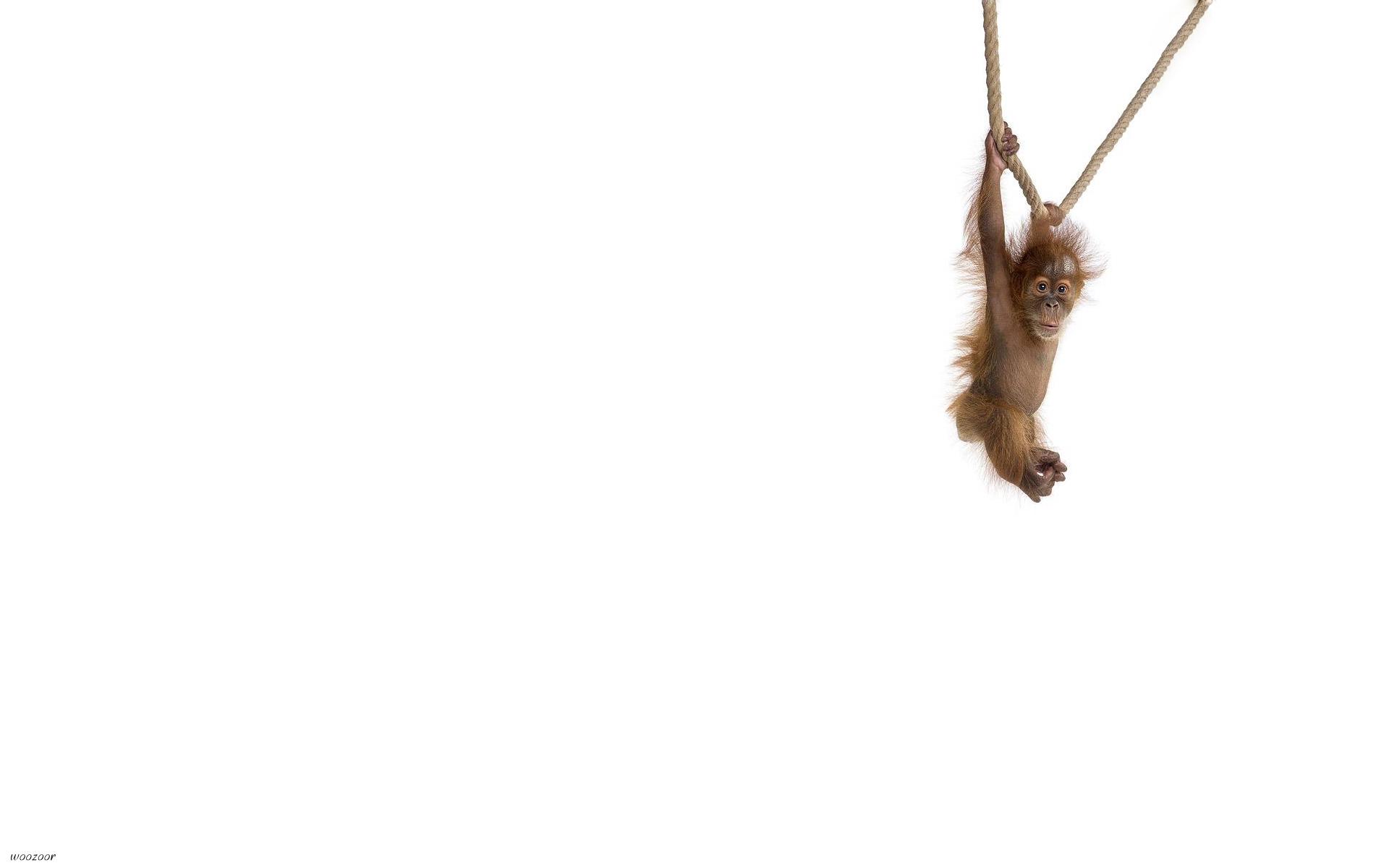 обезьянка ветка белая бесплатно