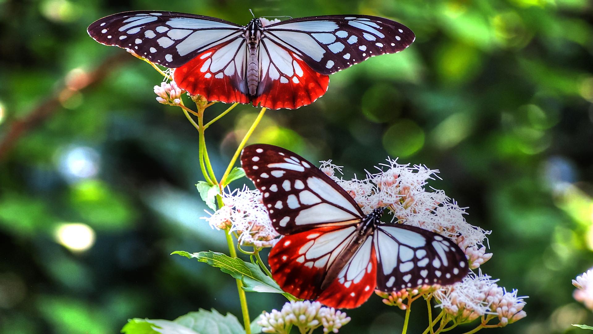 природа бабочка цветы животные насекомые роса в хорошем качестве