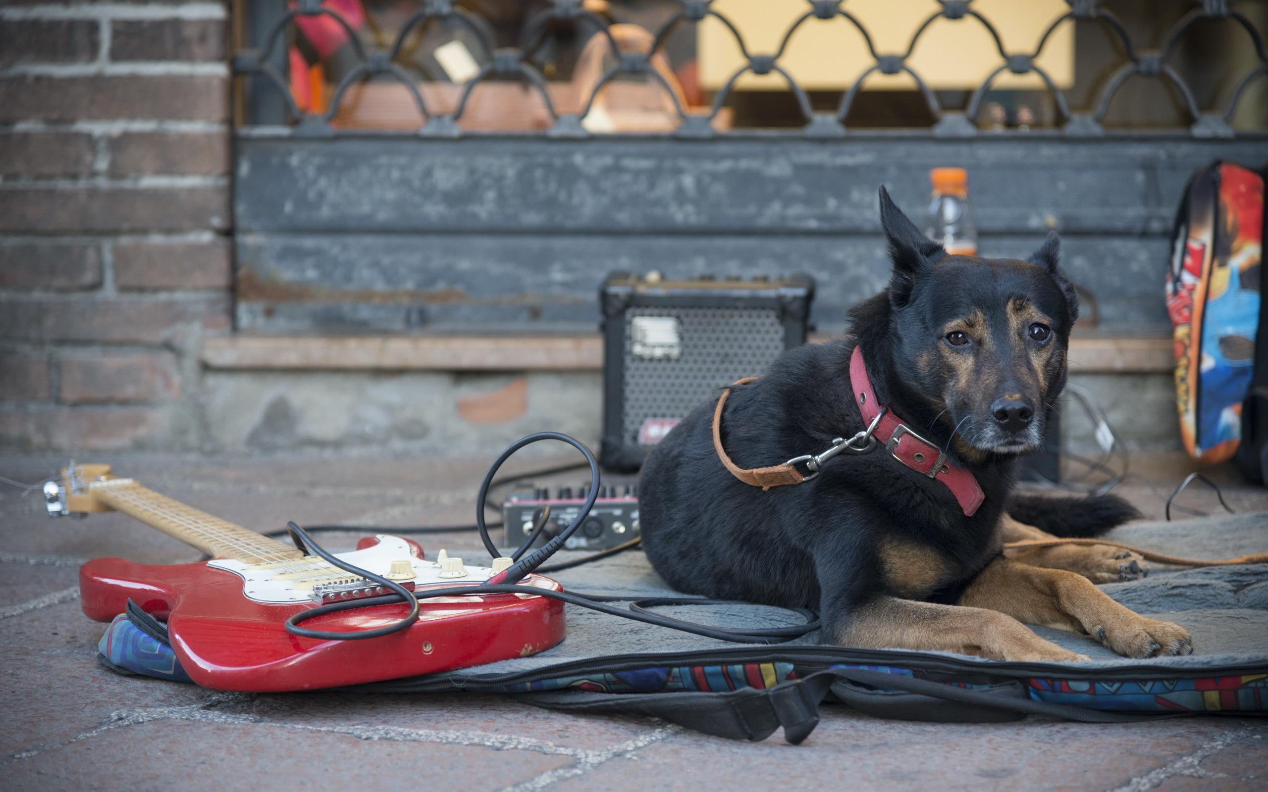 Собака на улице без смс