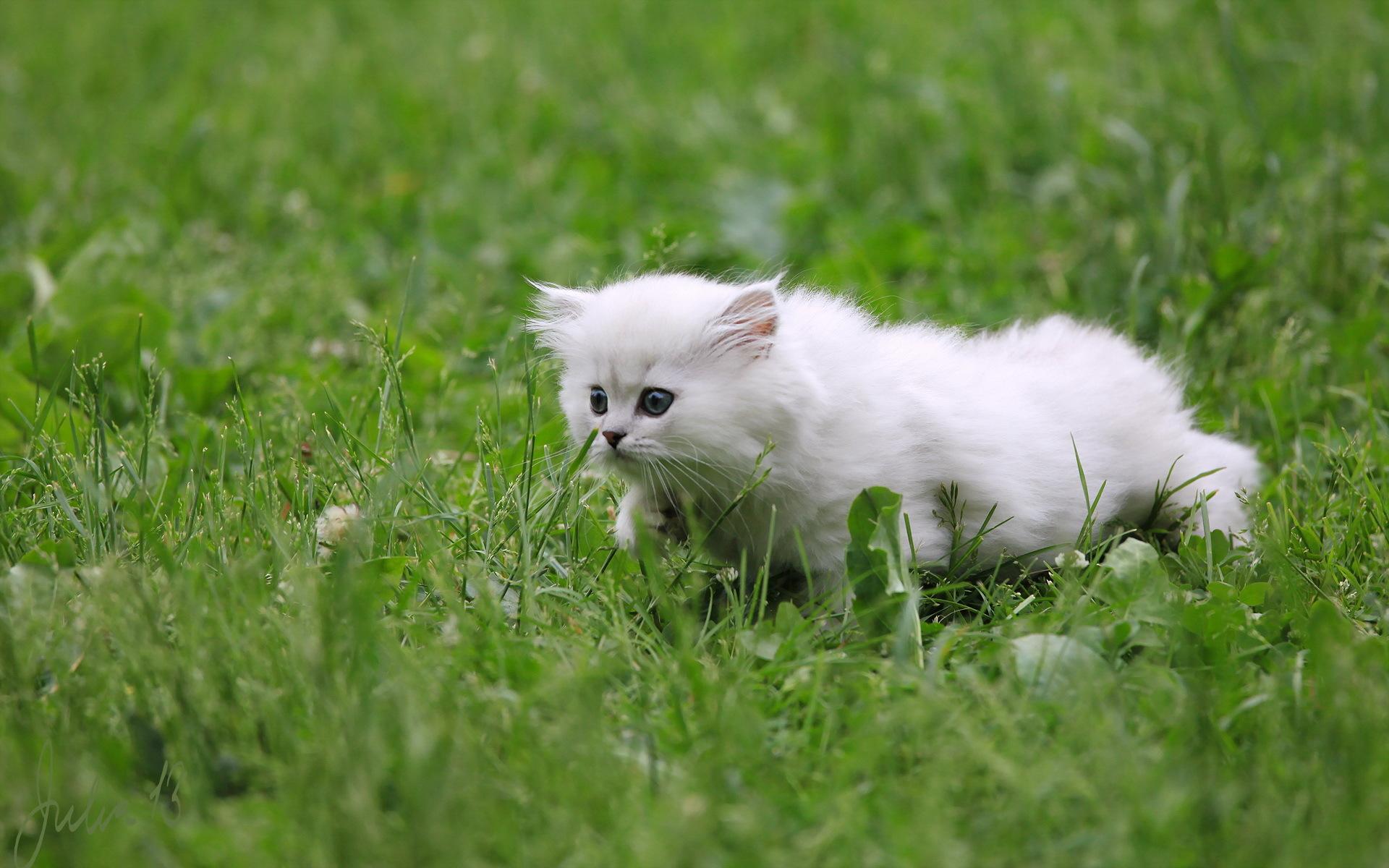Кот белый в траве загрузить