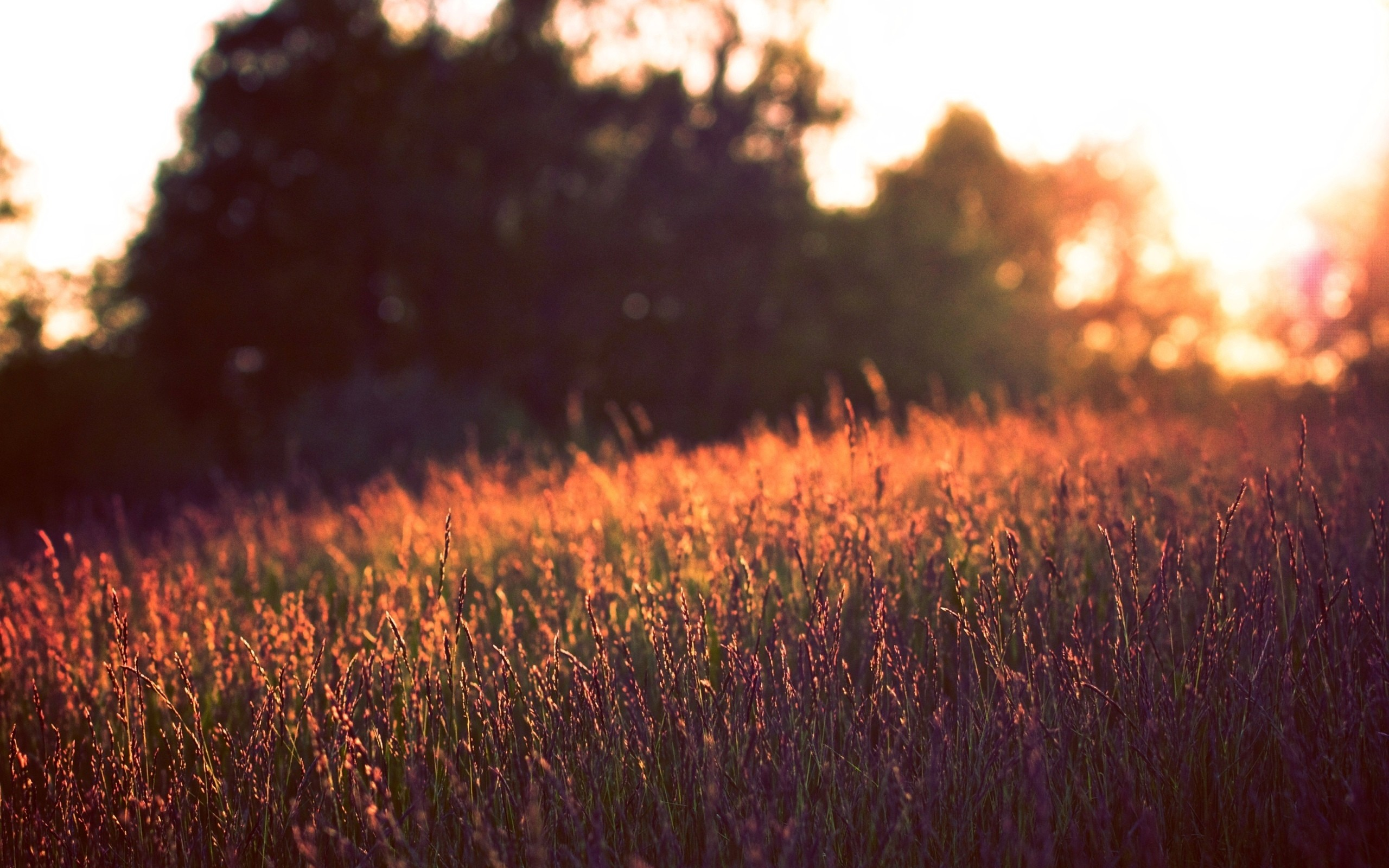 закат, лето, природа, солнце скачать