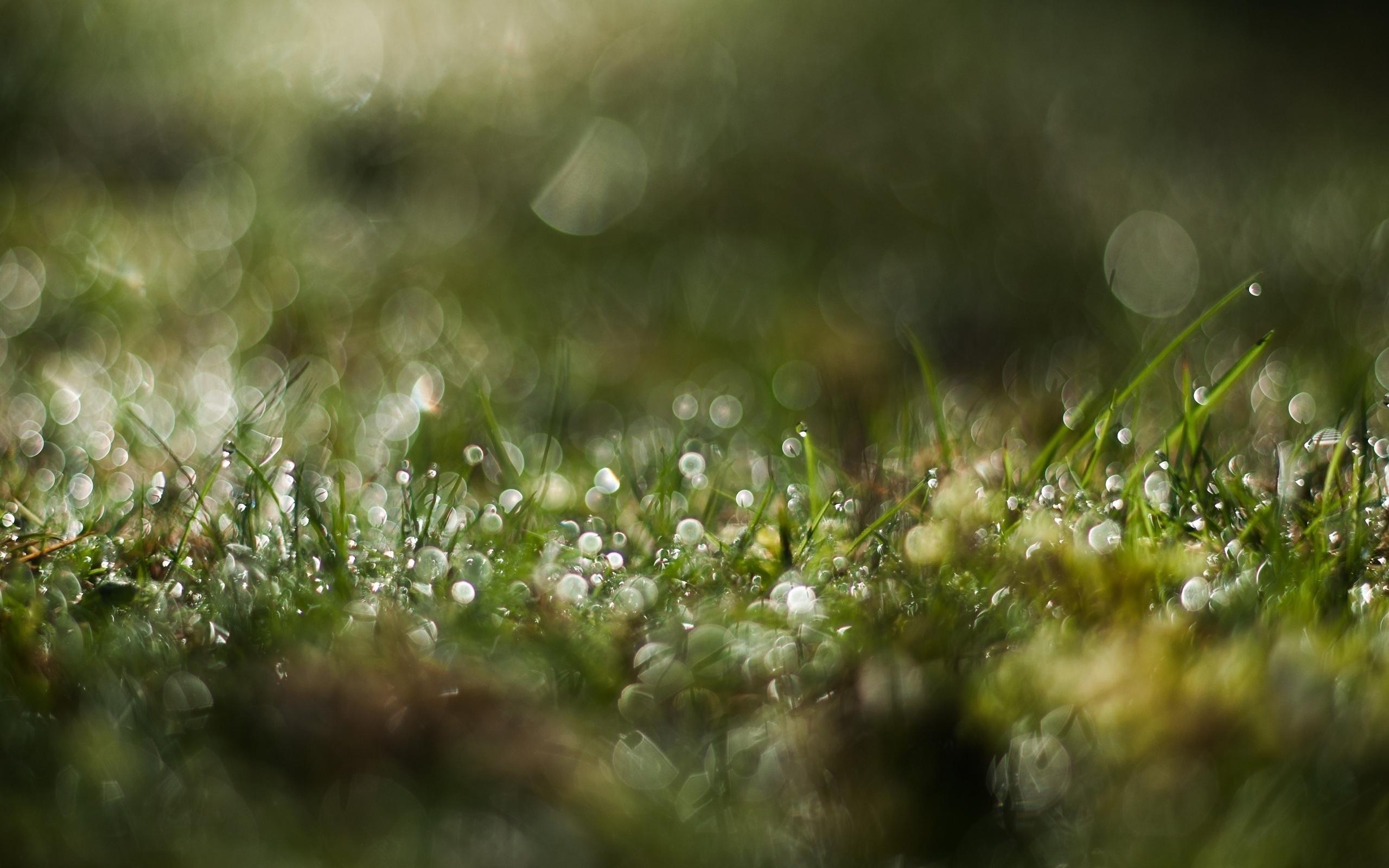 природа макро трава  № 2758792  скачать