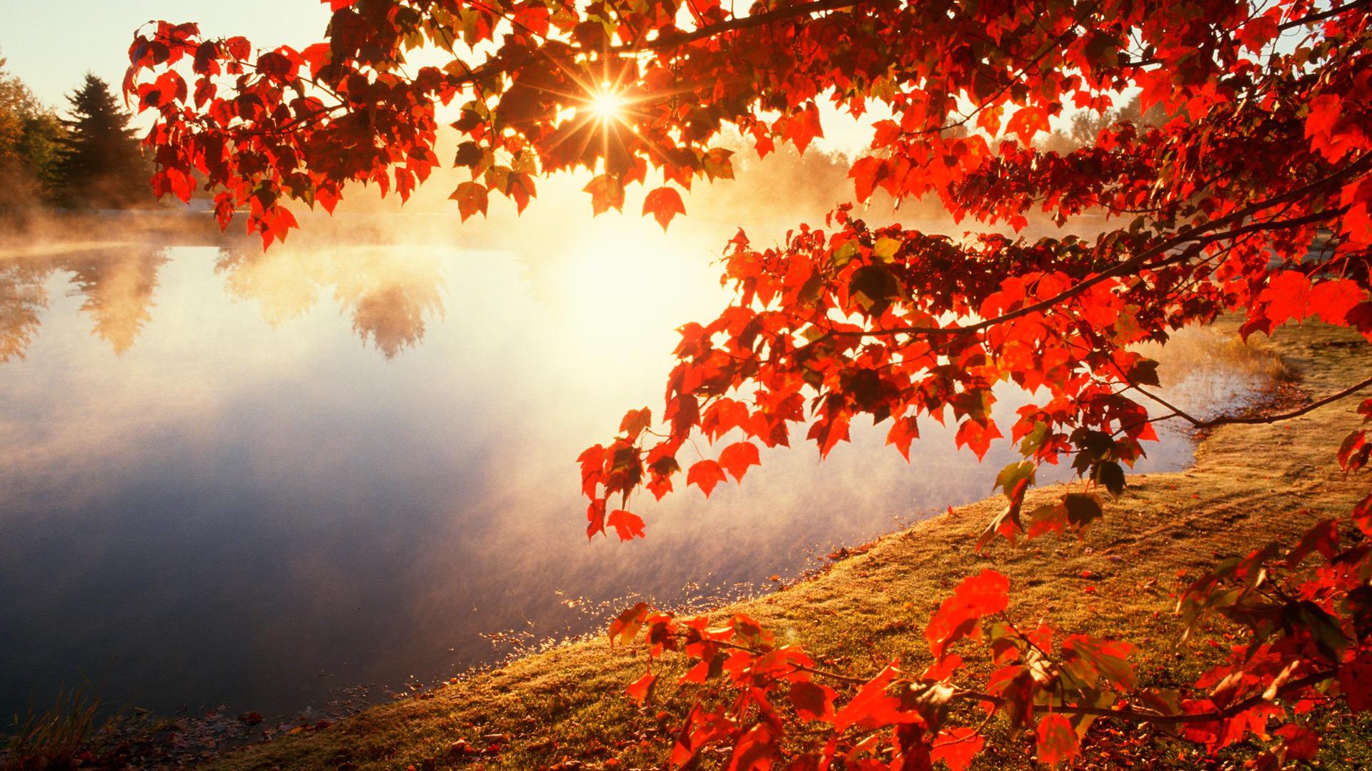 солнечная осень  № 44236 без смс
