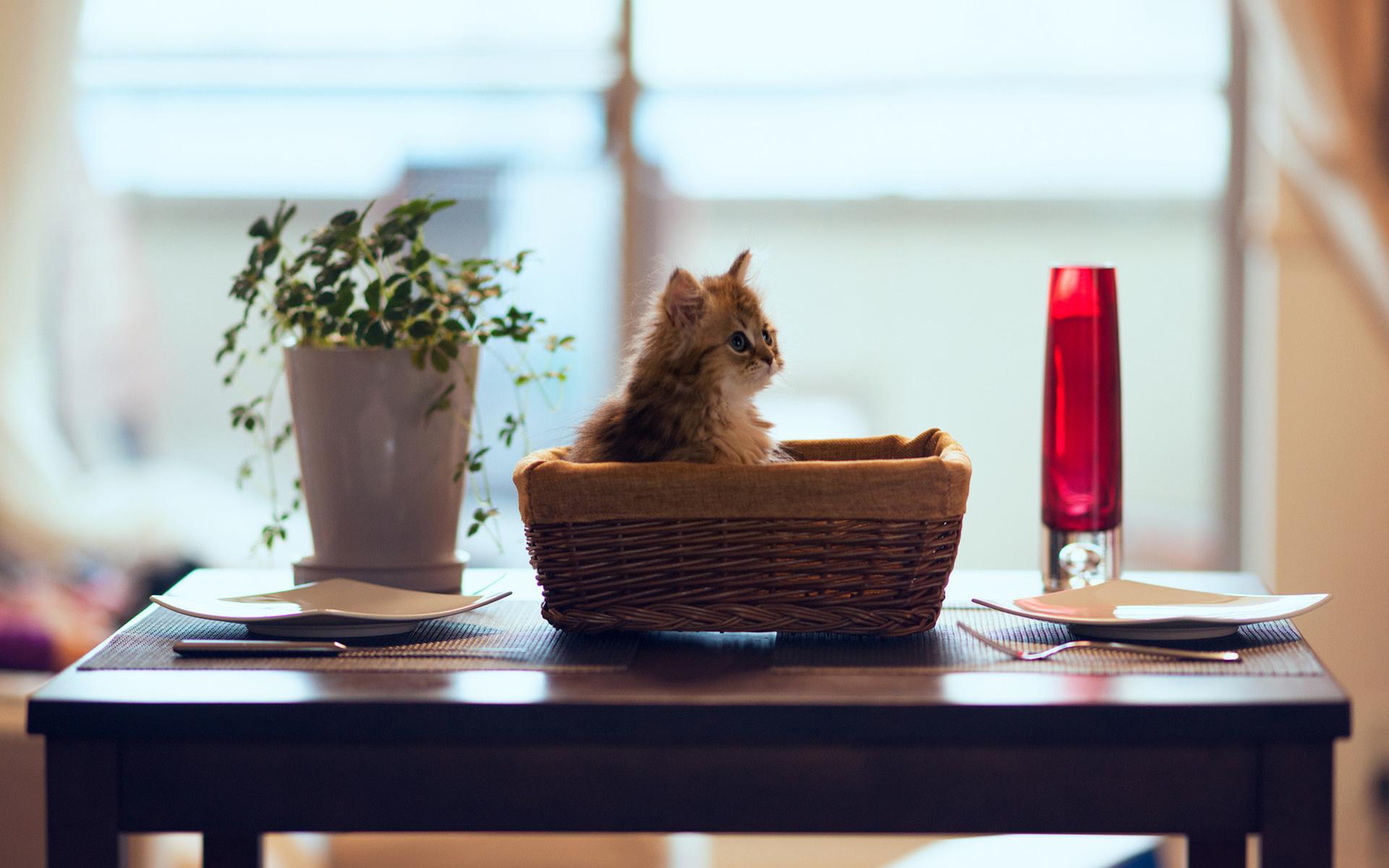кот на полке cat on the shelf  № 1698018  скачать