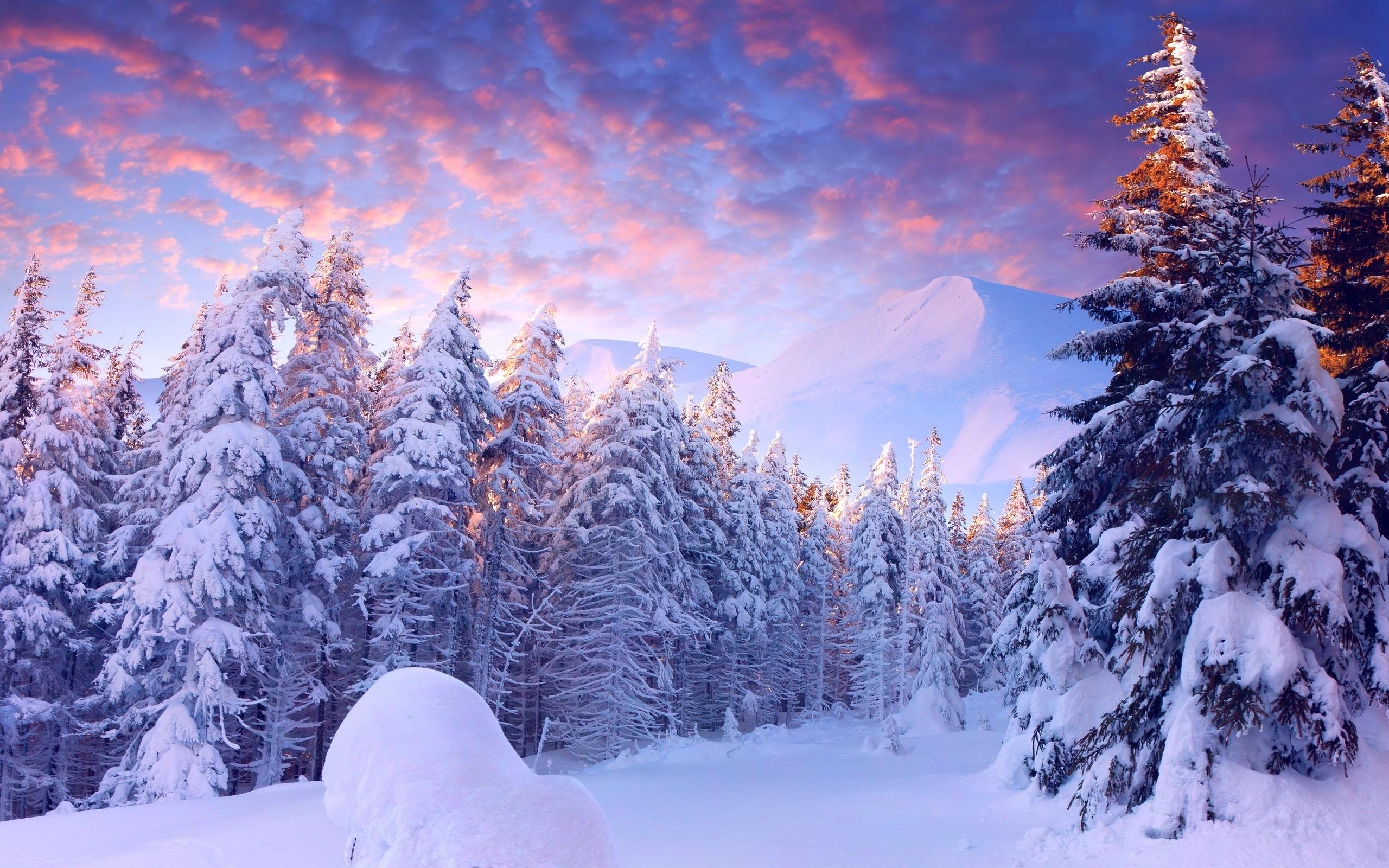 заснеженные деревья в горах  № 355874 загрузить