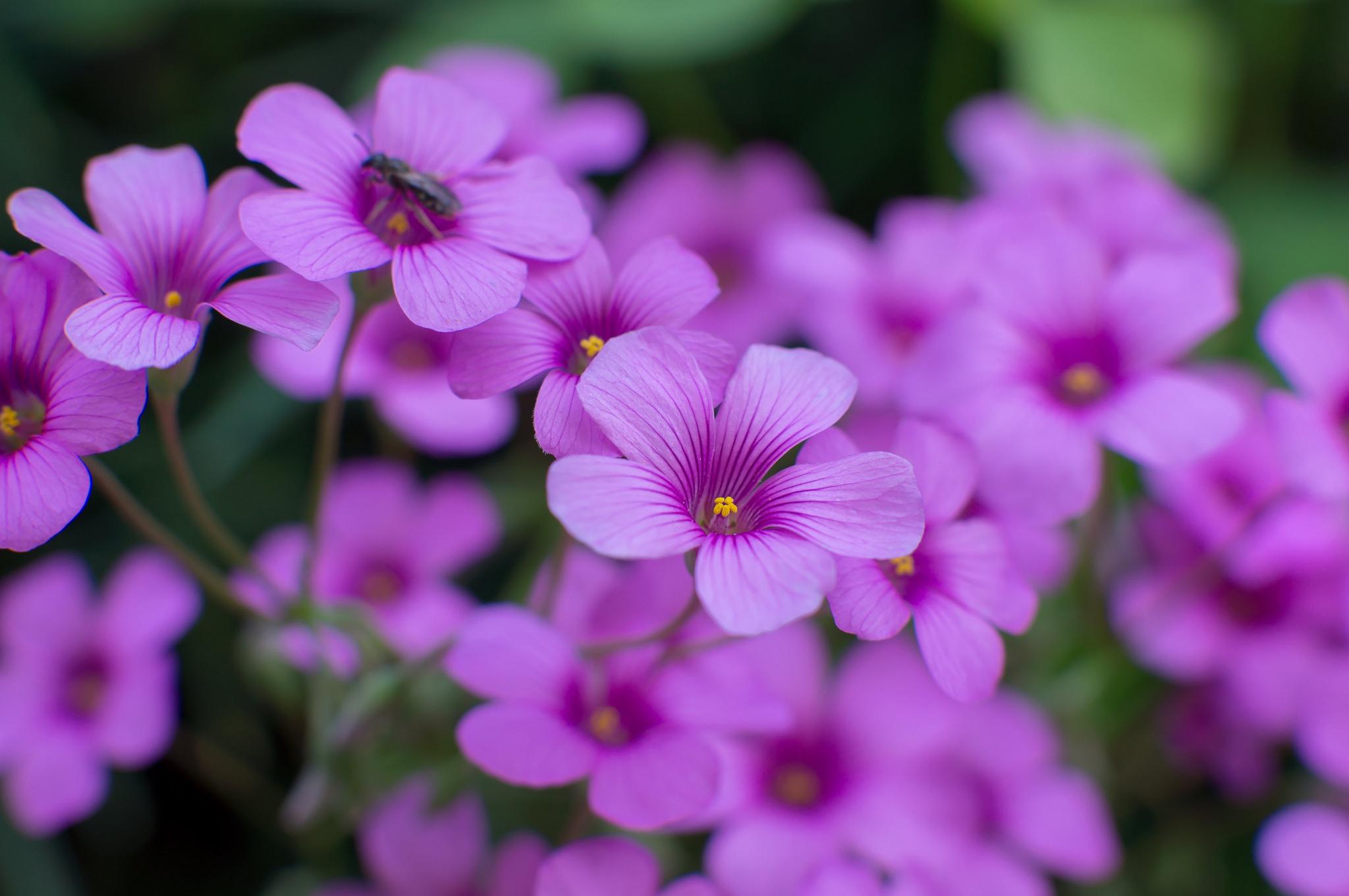 Картинки с фиолетовыми цветами в высоком качестве