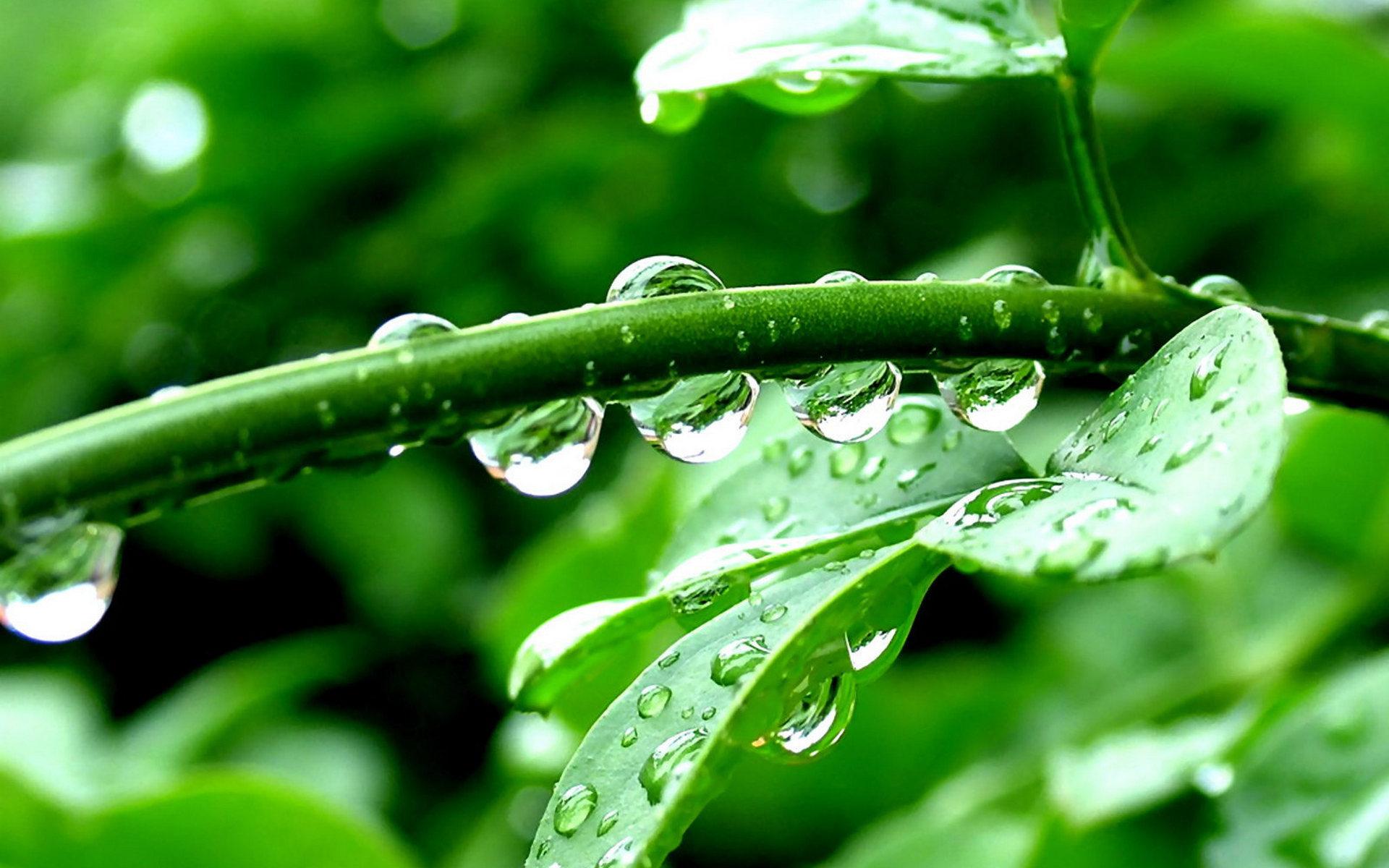 листья растение капли скачать