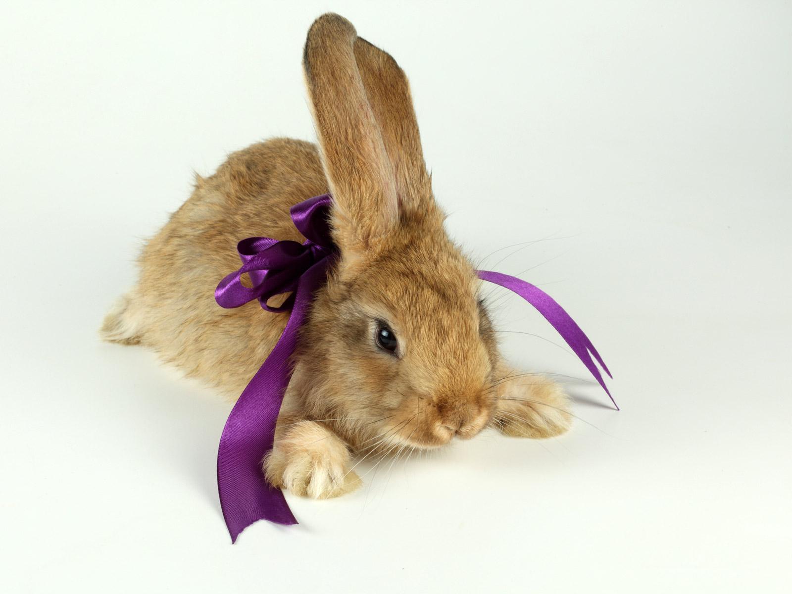 Кролик, морковка, собака бесплатно