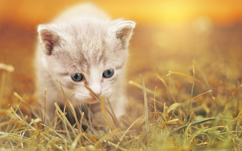 Открытка, картинки животных самые милые