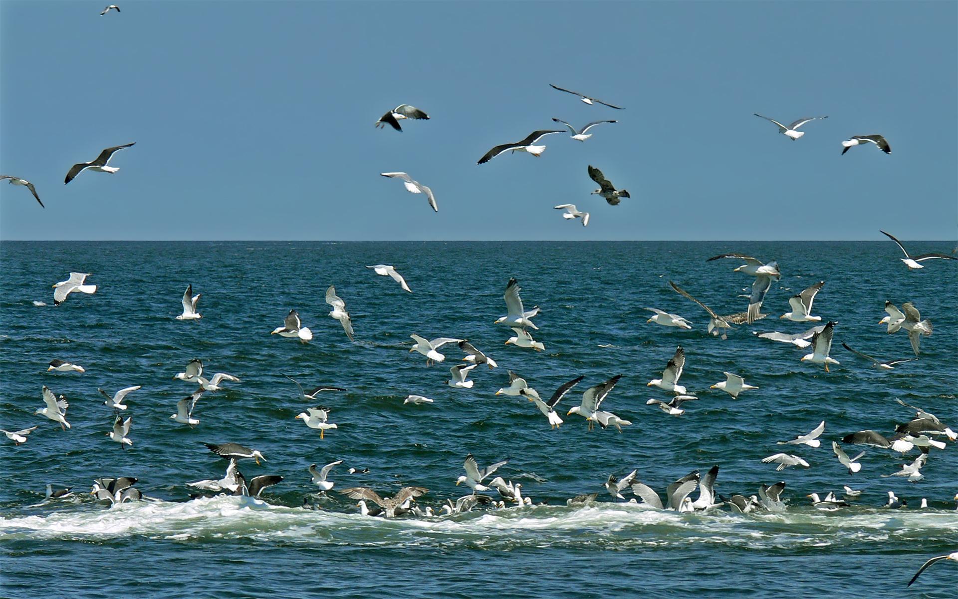 Смешные день, картинки анимации чайки и море