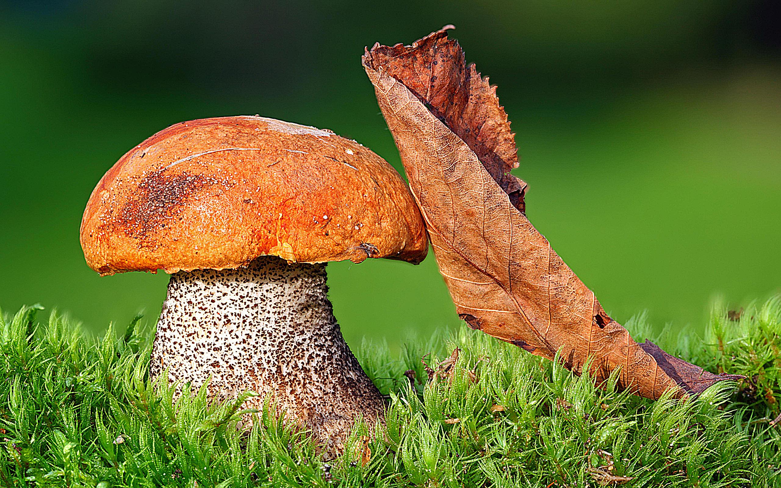 грибы скачать