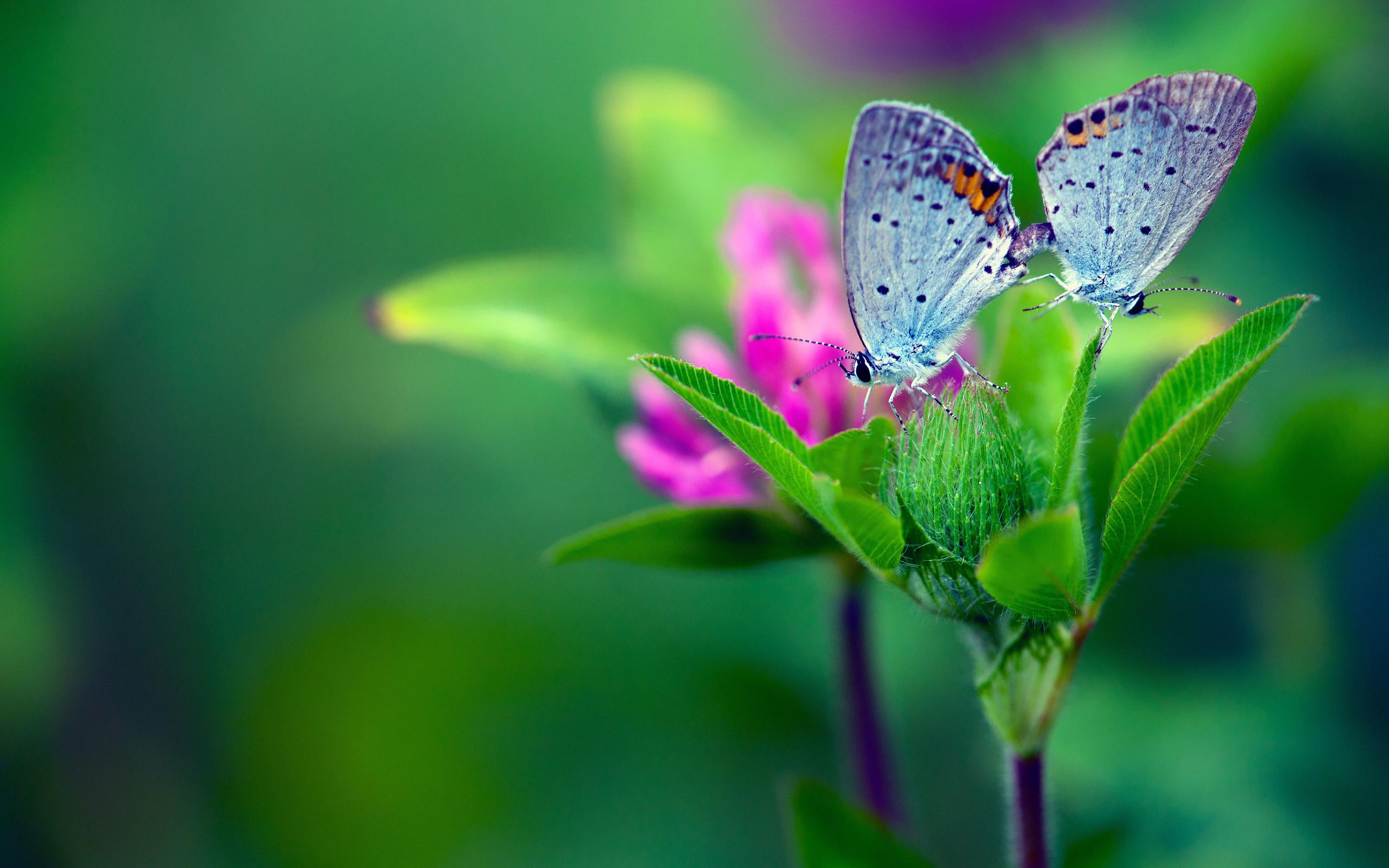 природа бабочка макро цветы загрузить