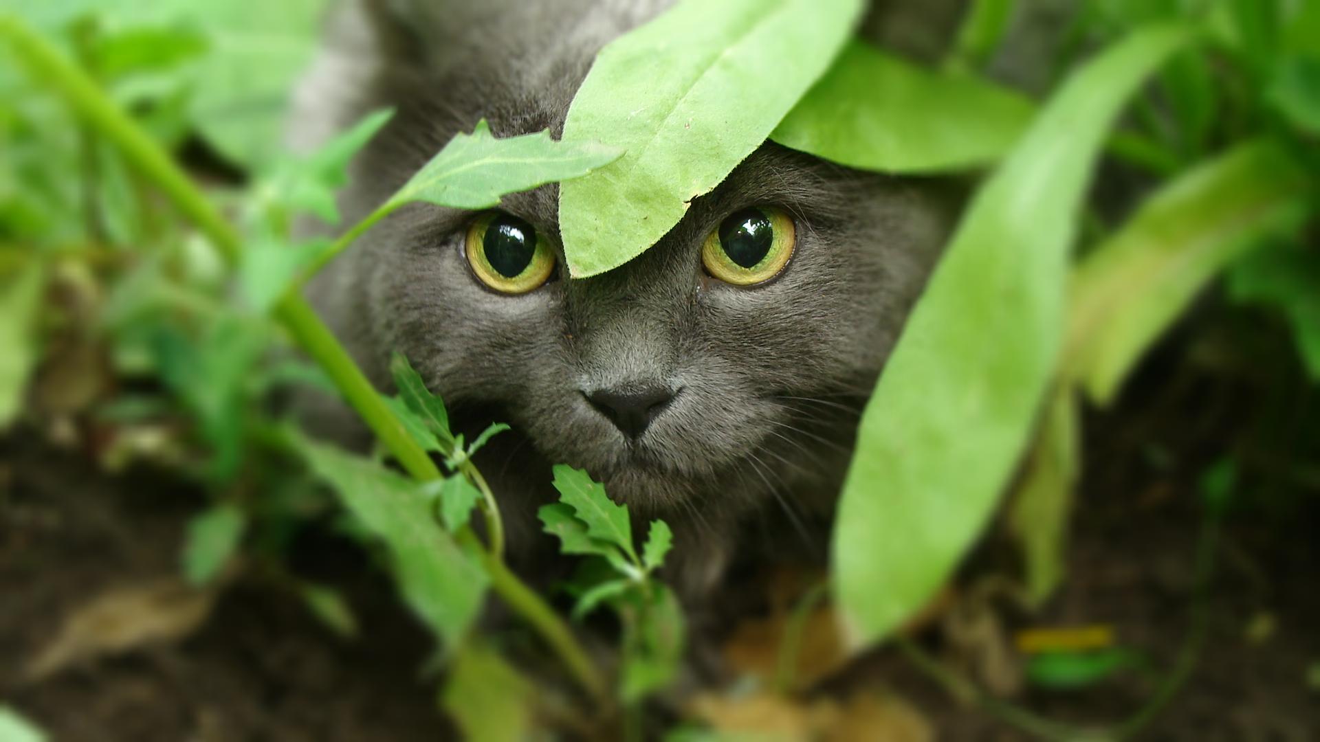 кот глаза зелень без регистрации