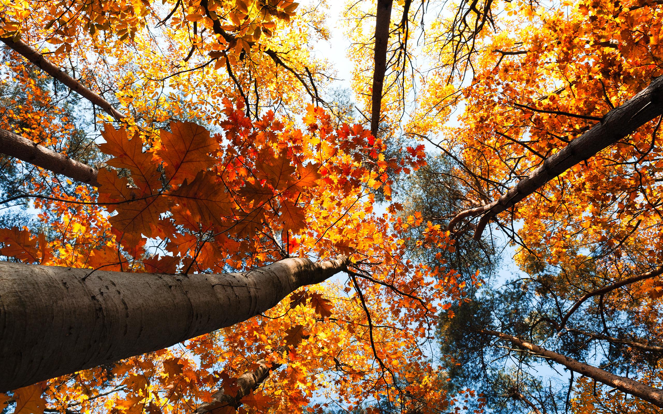 природа деревья листья осень nature trees leaves autumn  № 1036876 без смс