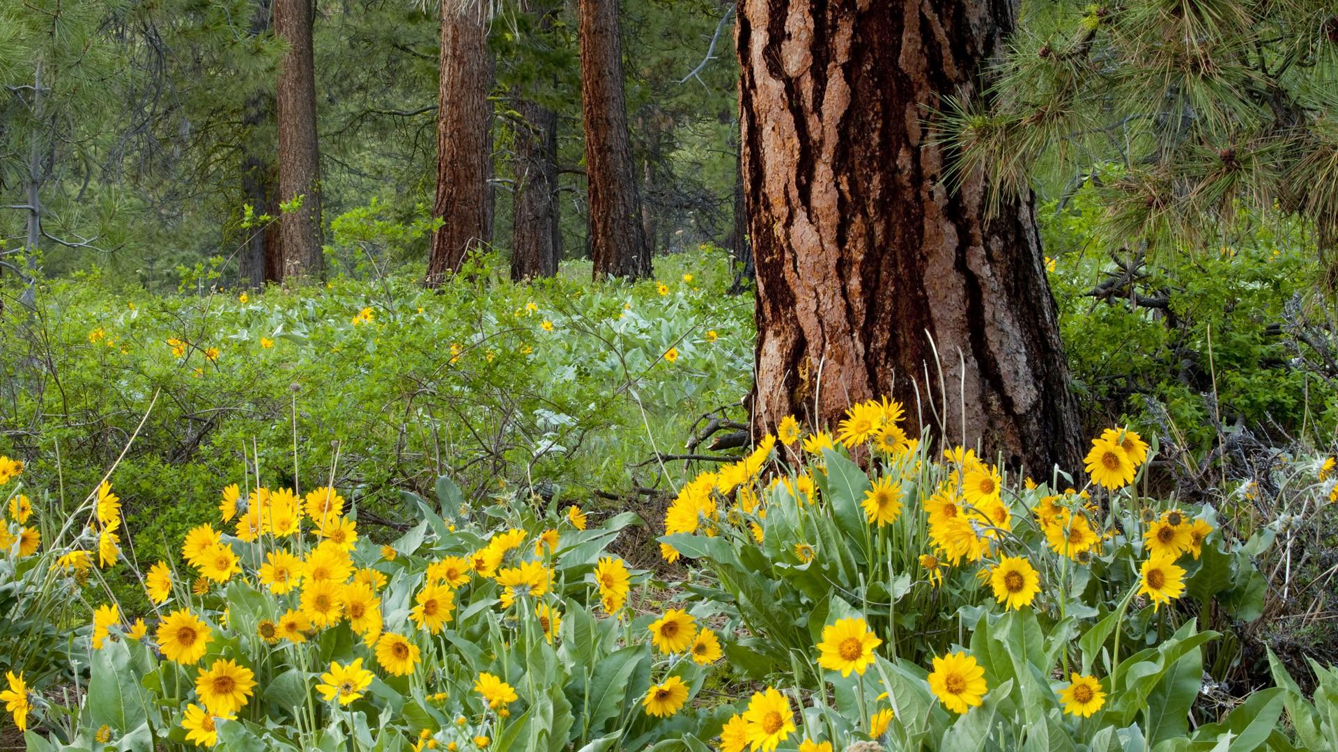 цветы лесные flowers forest бесплатно