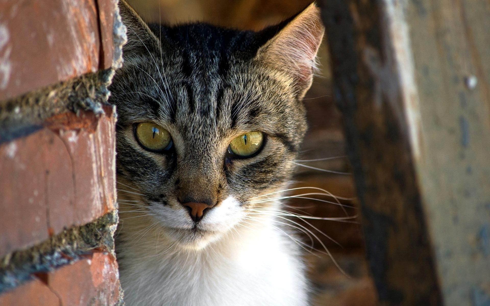 поставь картинки кошек ракушки