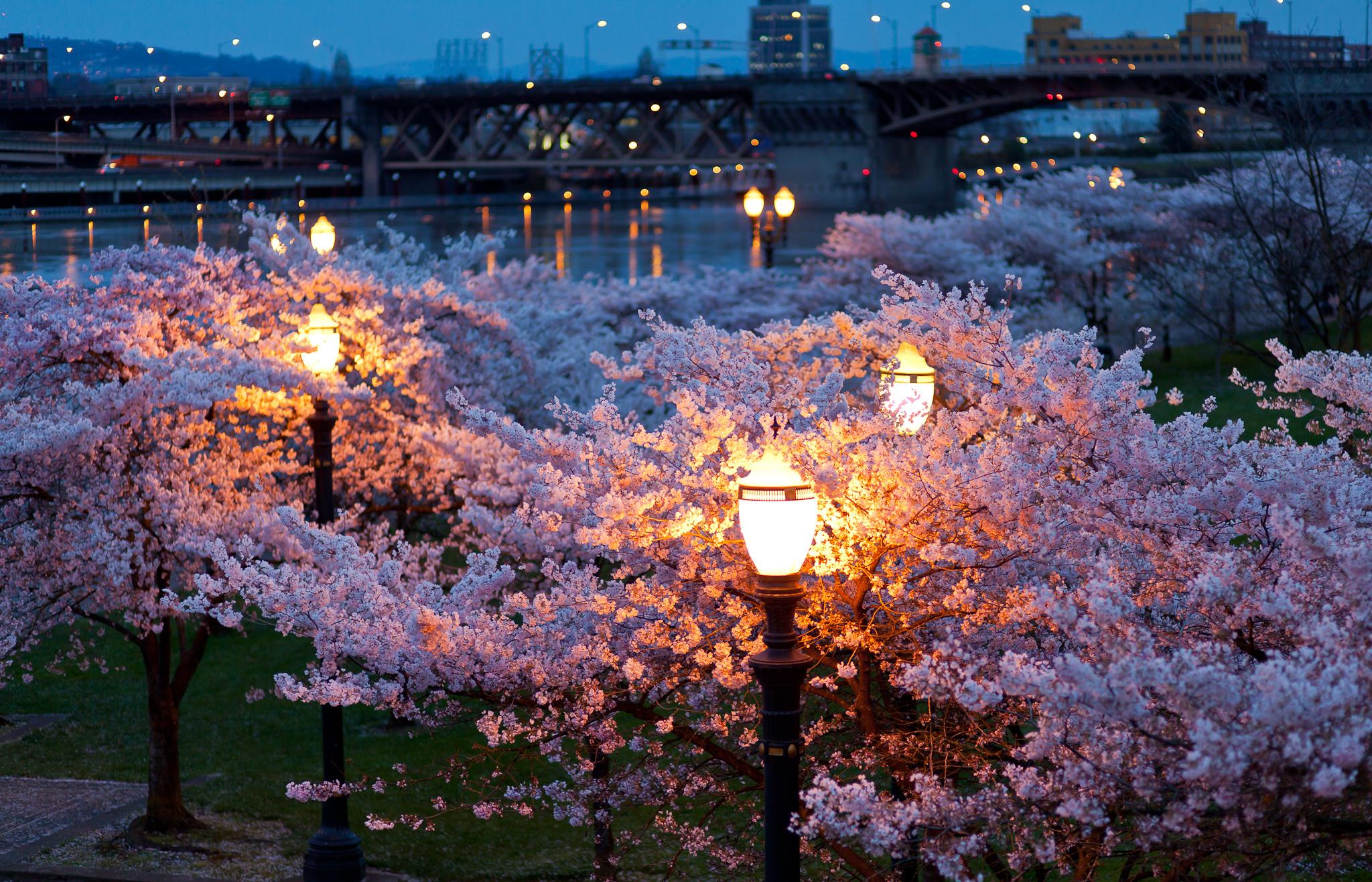 страны архитектура природа деревья ночь  № 3716912 загрузить