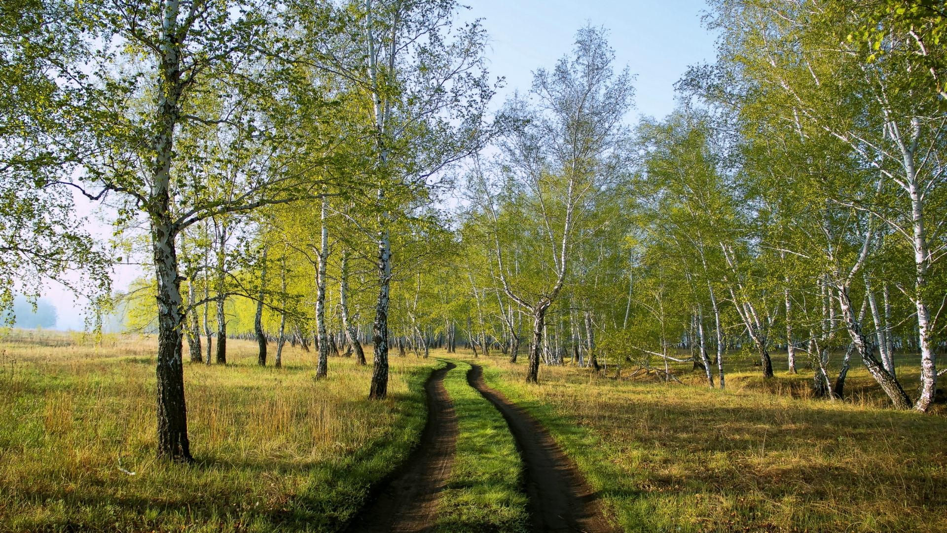 Дорога березы аллея бесплатно